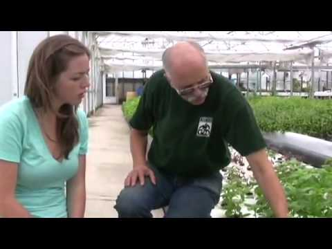 What is Aquaponics. Learn how to DIY aquaponic system