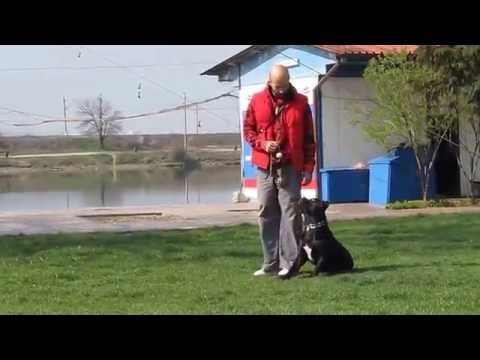 Nero first steps in agility - S.M.A.R.T. training of dogs