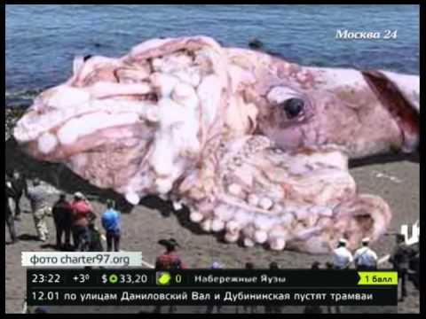 ловля гигантских кальмаров