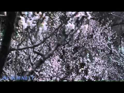 災害の記憶刻む花園 猪鼻谷フォレストパーク・メモリアル23