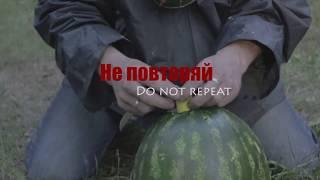 Противогаз против арбуза