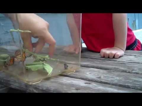 當一隻蝴蝶飛到這小男孩的臉上時…他的反應令所有人都萌倒了。
