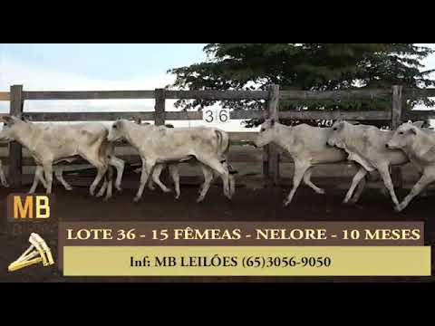 218º LEILÃO VIRTUAL MB LEILÕES