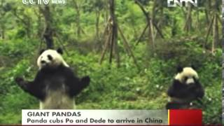 Video  Panda cubs Po and Dede to arrive in China