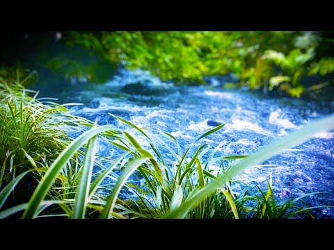 10 Hours River Sleep Sounds | Water White Noise for Relaxation (видео)