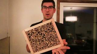 How to Make a DIY Cutter Bee House