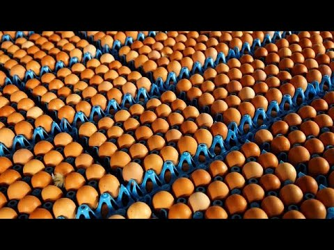 Έκτακτη σύνοδος υπουργών για τα μολυσμένα αυγά