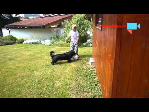 Syn Dominik se psem při neuspěšném fotbale