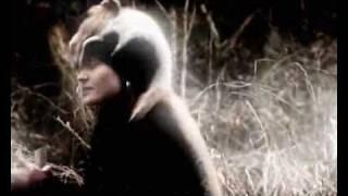 Video Prosti Dumi - Psy