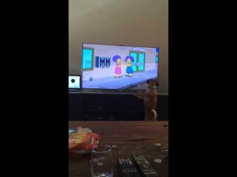 Hassu koira katsoo Family Guyta innoissaan