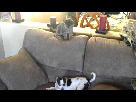 Chihuahua and Kitten: Deathmatch training