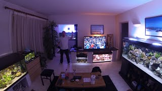 """My best video ! 210 000 thanks !!! If you like this this there is lot of Video on """"Ben video aquarium"""""""