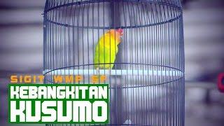 Video PRESIDEN CUP IV - Kebangkitan Kusumo Menjuarai Kelas Love Bird DPR A MP3, 3GP, MP4, WEBM, AVI, FLV Maret 2018