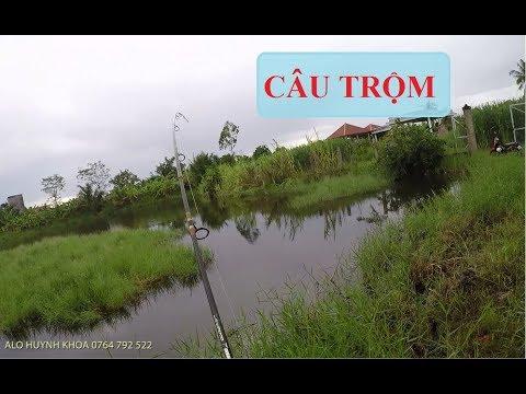 ĐI CÂU CÁ TRA TRỘM VÀ CÁI KẾT |  HUYNH KHOA FISHING - Thời lượng: 12:03.