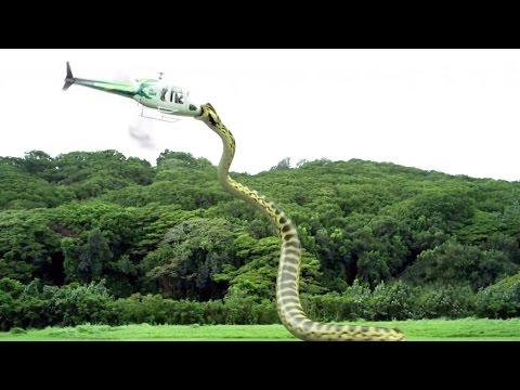 TOP 10 Serpientes Más Grandes Del Mundo