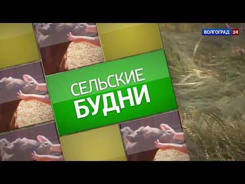 Николаевский район. Выпуск 19.10.17