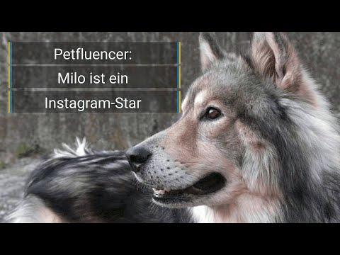 Petfluencer: Ein Hund als Instagramstar mit 57.000 Followern