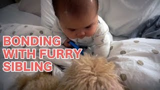 Bonding With Furry Sibling