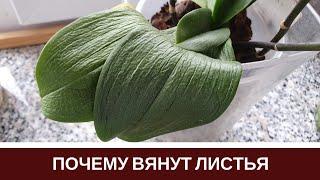 Листья орхидея иНабор Как без выкройки сЧеремуха иВаза с декором из шпагата
