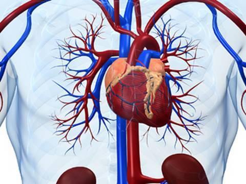 Stammzellen: Besserung eines gebrochenen Herzens?