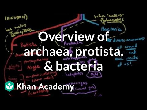 Overview Of Archaea Protista And Bacteria