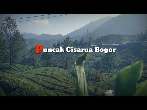 Puncak Cisarua Bogor.