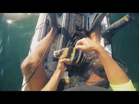 Pêche en kayak Maroc ( surprise session ) debut-novembre-2017