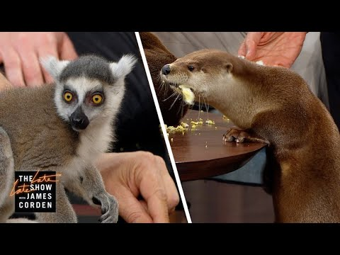 Download Screech Owls & River Otters w/ Jack Hanna, Jeff Goldblum & Marlon Wayans HD Mp4 3GP Video and MP3