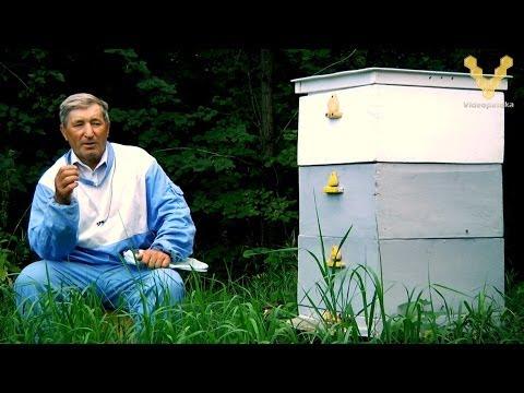 пчелы степаненко главный взяток впрочем, куда