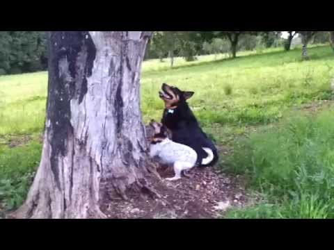 "Cats and dogs playing together "" Clever dog climbs tree!'"