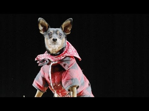 Halloween Safety Tips for Dogs | Teacher's Pet With Victoria Stilwell