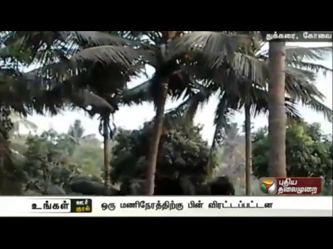 Forest-officials-chase-away-14-elephants-in-Madhu-Karai-Coimbatore