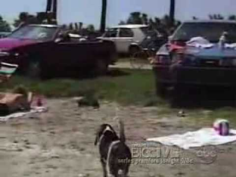 AFV - Animal Stealing