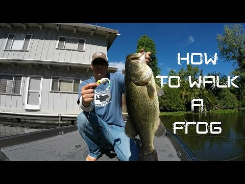 Bass Fishing: How to walk a Frog