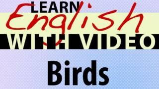 Birds Lesson