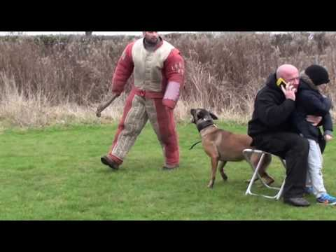 Video personal / family protection dog training download in MP3, 3GP, MP4, WEBM, AVI, FLV January 2017