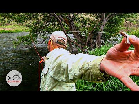 Deschutes River Salmon Flies by Todd Moen