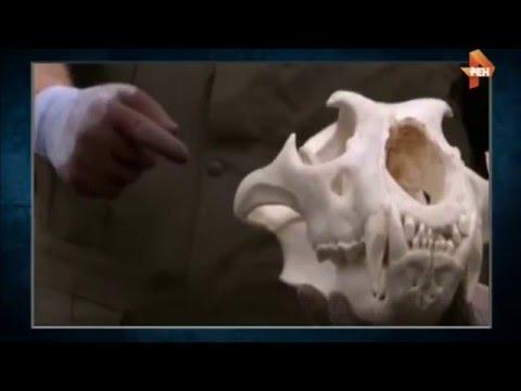Как на Западе создают общество бесполых людей (видео)