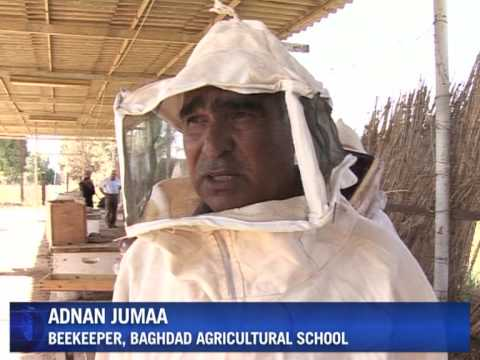 Iraqi honey industry sours in wake of conflict