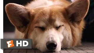 Nonton A Dog S Purpose  2017    My Best Life Scene  7 10    Movieclips Film Subtitle Indonesia Streaming Movie Download