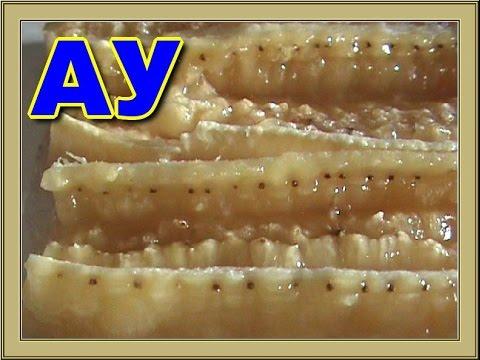 Смотреть / Выращиваем бананы из семян бананов-Grown bananasgrow from ceeds bananas / WaterVideo.ru / видео онлайн в хорошем каче