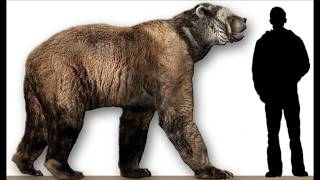 Video Bear Attacks, Largest and Scariest! How Deadly?  World's Greatest Animals MP3, 3GP, MP4, WEBM, AVI, FLV Mei 2017