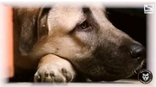 Dog Model Agency vu par Télésambre!