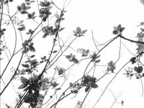 The Rosebuds - Waiting For You lyrics