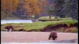 Man Fights Bear For Salmon