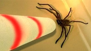 Big Spider Attacks Lightsaber