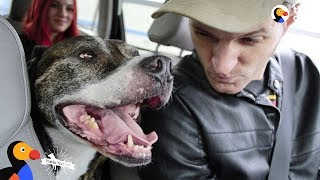 Veteran Rescues Pit Bull Dog Who Rescues Him Right Back | The Dodo Pittie Nation by The Dodo