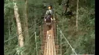 Flight Of The Gibbon Fly Though The Jungle Chiangmai Thailand