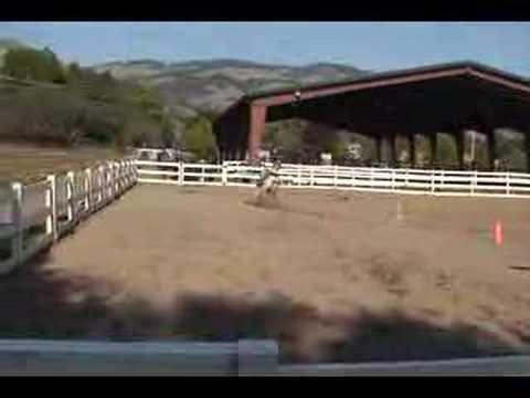 horse barrel racing dancer