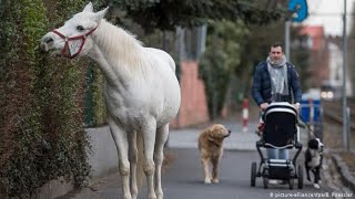 The Surprising Reason This Horse Has Gone On A Walk Alone Every Day For The Past 14 Years by Did You Know Animals?